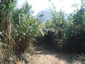 foret de bambou